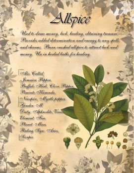 Book of Shadows: Herb Grimoire - Allspice by CoNiGMa