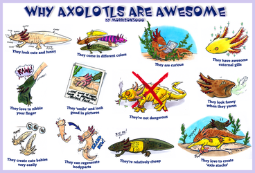 Why axolotls are awesome by Loony-Madness