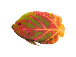 Aspen Leaf Tropical Fish 1 by AgustinGoba