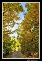 yellow forest 3I03 by liviugherman