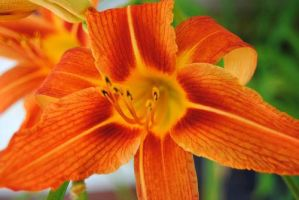 Tiger Lily X by charliemarlowe