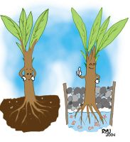 Hydroponics by roelworks