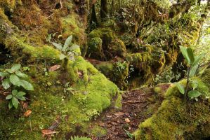 Mossy forest Stock 23 by Malleni-Stock