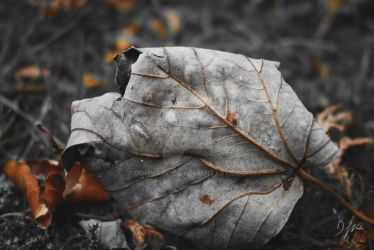 Autumn Leaves by domwlive