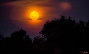 The Colours of Moonrise by Nini1965