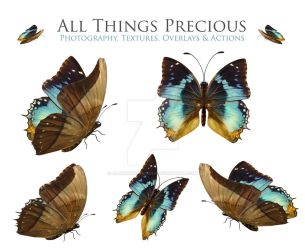Butterfly and Fairy Wings Overlay SET 3 by AllThingsPrecious