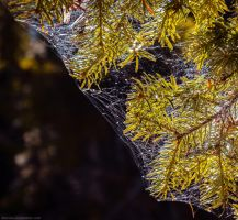 In the web by Laerian