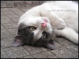846 by evy-and-cats