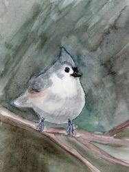 Puffy Tufted Titmouse in Watercolor by HaleyGottardo