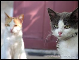 467 by evy-and-cats