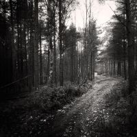 Pine Forest IV by Jez92