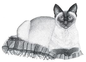 Siamese Cat On Jacob Blanket by TootieFalootie
