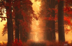 -Mesmerizing poetry of autumn- by Janek-Sedlar