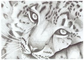 Leopard 001 by luckynumber29