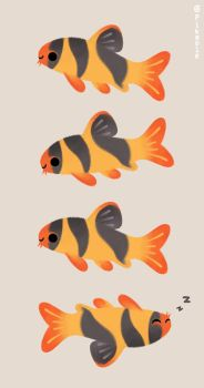 Clown loaches by pikaole
