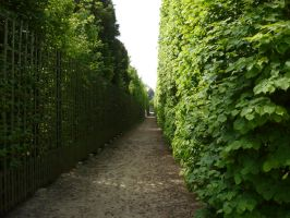Hedge Maze STOCK by Chiron178