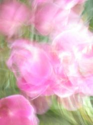 pink orchid blur by synesthesea