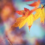 fall.in.colors.I by zvaella