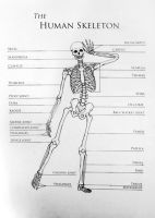 Skeleton Chart by whimsycatcher