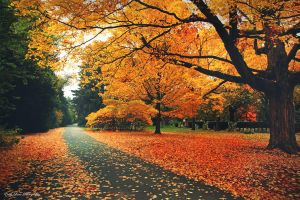 Autumn Passage by MyLifeThroughTheLens