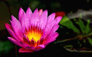 Lotus by montag451
