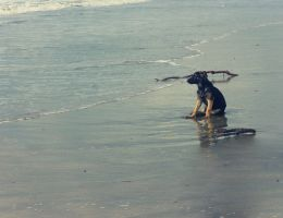 dog at the beach by mostpato