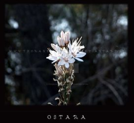 ostara 2007 by ThoRandMorgaine
