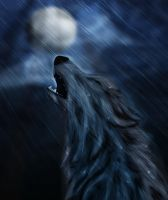 Wolf Howling in the Rain by XBlackIce