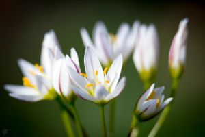 Ode to Spring by FabulaPhoto