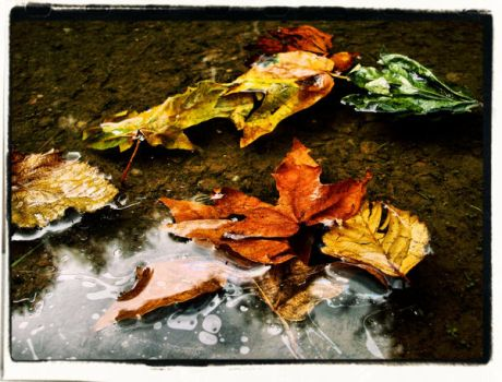 Fall- untitled by PerpetualDame