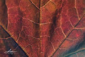 Leather or Leaf by Stridsberg