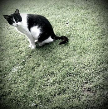 sitting cat by miki