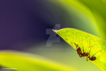 Ant by tpaulanny