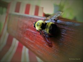 Bee......3 by gintautegitte69