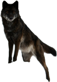 Black Timberwolf Precut by WolfLover10122