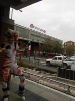 Cats Cosplay at West Ham - On my way to Excel by GarnetWeavile461