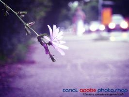 Psd Toning by canalphotoshop