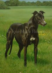 Tammy - greyhound portrait by Canis-Lupess