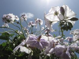 Flowers In The Sky by Maltese-Naturalist