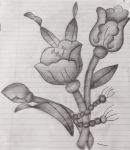 Flower Pencil Art  by Surdy12321
