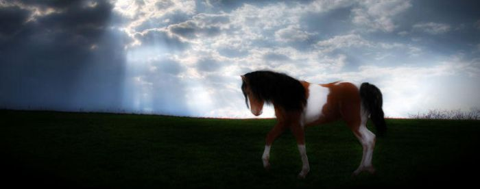 Facebook Cover Horse Manip by Shaystuh16