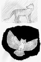 Thylacine and owl by Rahball