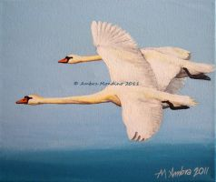 Mute swans by flysch