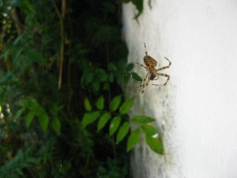 Spider that looks like OoT by Andrecp