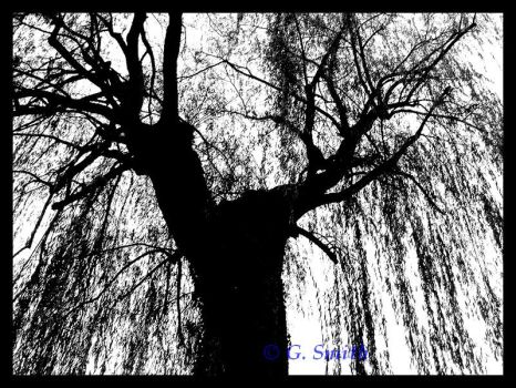 Weeping willow. by Chaleureux