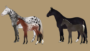Mare and Lineage Foal Auction - CLOSED by Anonymous-Shrew