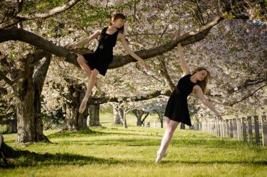Cherry Blossom Ballet by nikongriffin