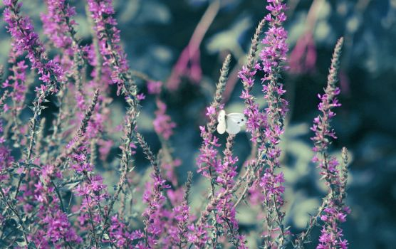 Find the Butterfly by MaddyPhotos
