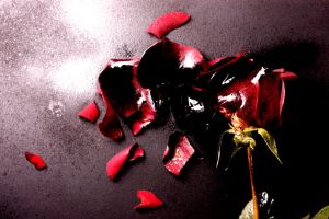 Death of a Rose 4 by AARON-ROBB