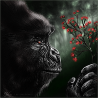 Elder Gorilla. by Zaellrin